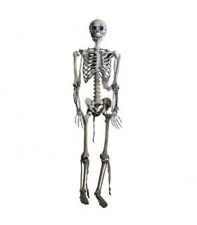 esqueleto articulado, tamanho natural