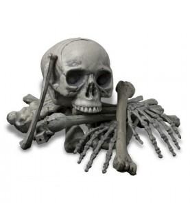 ossos humanos, 18 peças